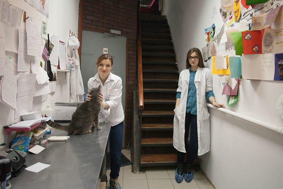 Коты иты: Как помочь брошенным животным. Изображение № 15.