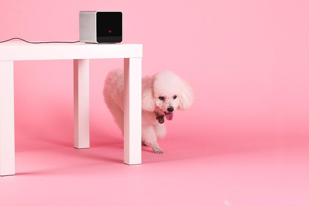 Petcube: Гаджет для общения с животными на расстоянии. Изображение № 6.