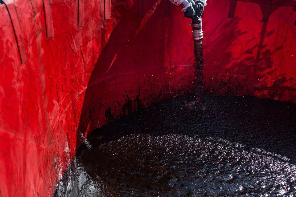 Как леса Коми очищают от нефти. Изображение № 17.