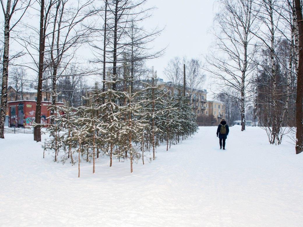 Дорожка в Старопарголовский жилмассив через парк «Сосновка», один из самых крупных в Европе. Изображение № 17.