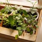 Где посадки: Что горожане выращивают на балконах иподоконниках. Изображение № 31.