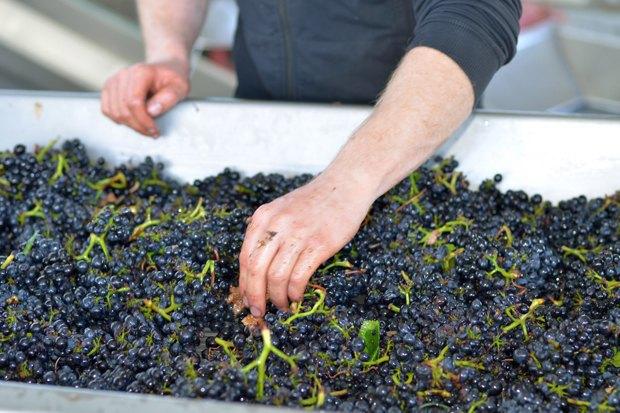 Что такое органическое, биодинамическое иприродное вино. Изображение № 9.