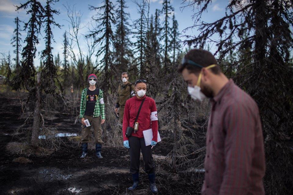 Как леса Коми очищают от нефти. Изображение № 32.
