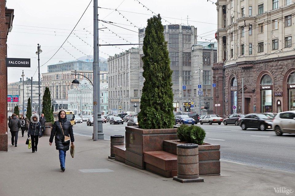 Фото дня: Туи и можжевельник наТверской улице. Изображение № 7.