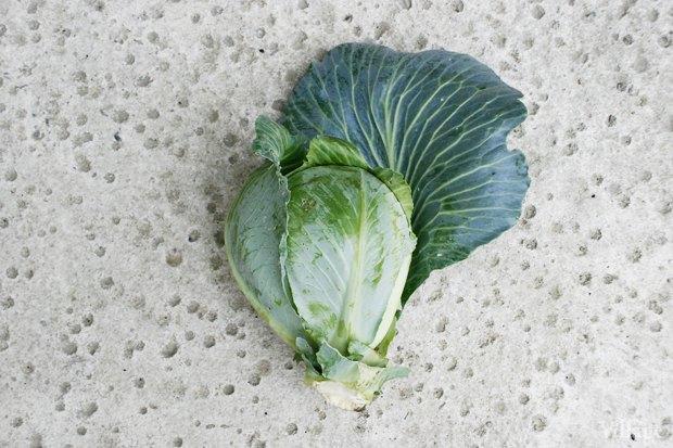 На районе: Как разбить огород и выращивать бесплатные овощи для соседей в Шушарах. Изображение № 10.