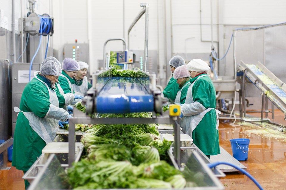 Производственный процесс: Как делают салаты для McDonald's. Изображение № 14.
