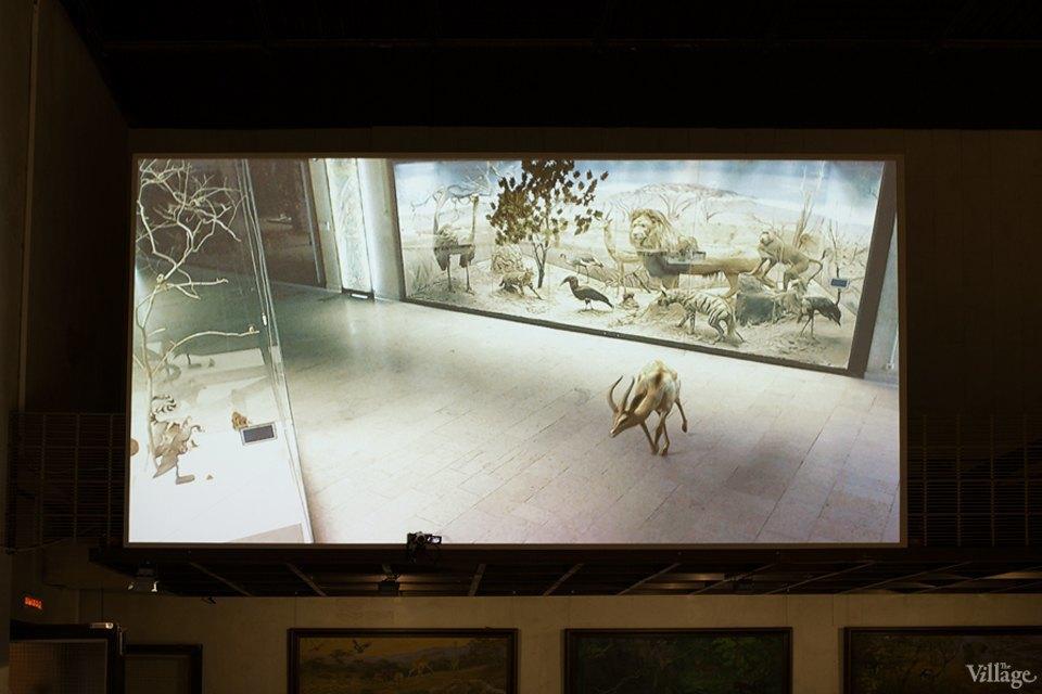 Перемены в Дарвиновском музее: «Можно бегать, прыгать и шуметь». Изображение № 19.