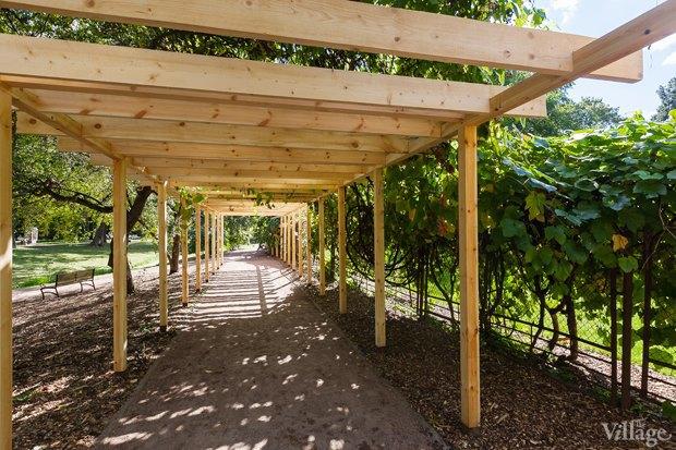 Фото дня: Что изменилось в Ботаническом саду. Изображение № 5.
