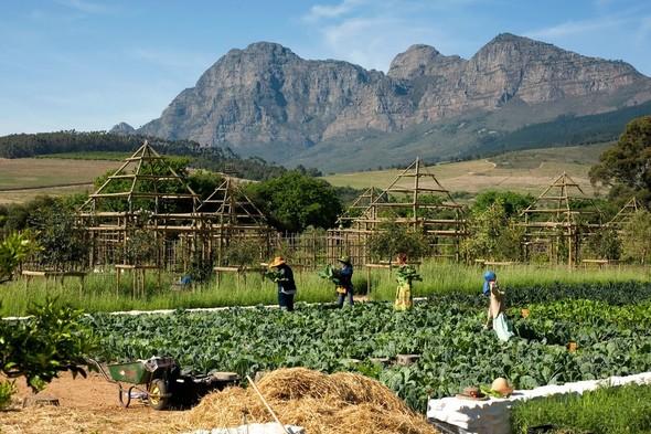 Иностранный опыт: Органическая еда в ЮАР. Изображение № 5.
