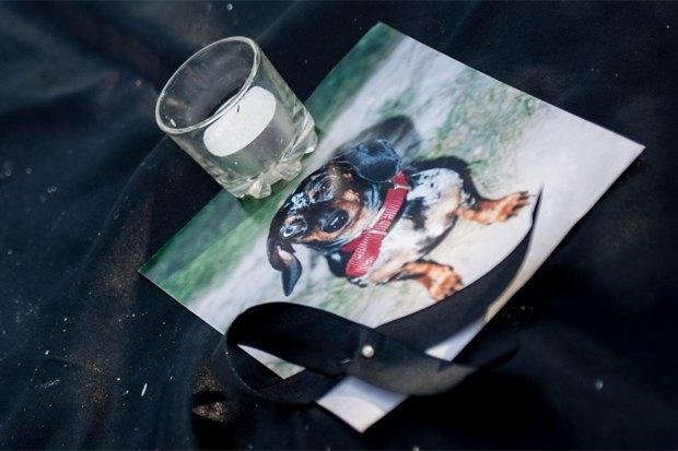 «Пустой поводок»: Как владельцы собак борются сэпидемией отравлений . Изображение № 2.