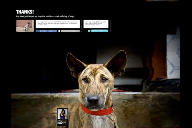 Иностранный опыт: Что делать сбездомными собаками. Изображение № 22.