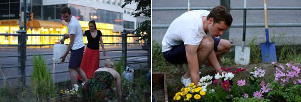 Последователи Dodo высаживают клумбу в самом центре Хельсинки, Kamppi, Helsinki