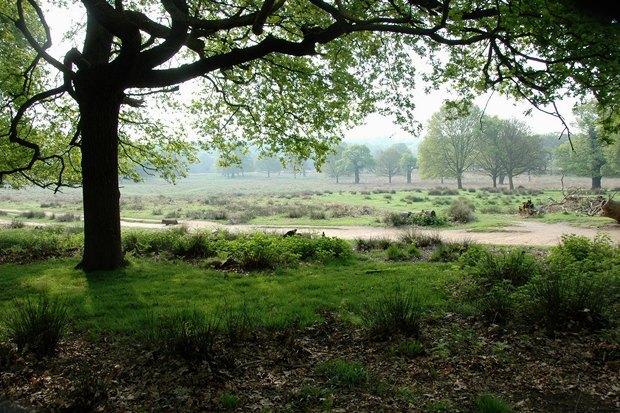 10мест вЛондоне, куда ходят сами лондонцы . Изображение № 16.