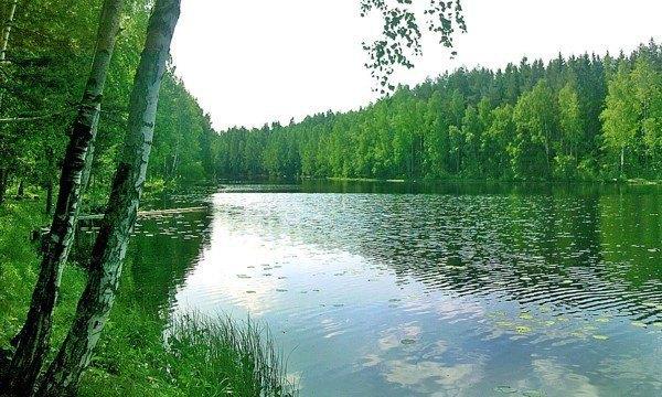 Под Петербургом откроется летний проект Forest Camp . Изображение № 3.