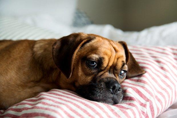 Как приспособить квартиру для собаки. Изображение № 1.