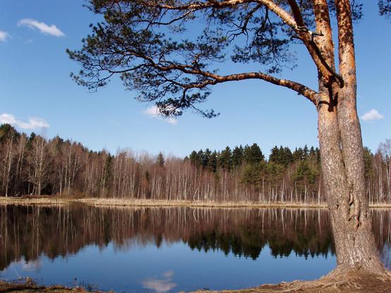 озеро Черное (г. Зеленоград), zlngrd.ru