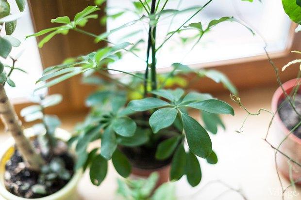 Где посадки: Что горожане выращивают на балконах иподоконниках. Изображение № 71.