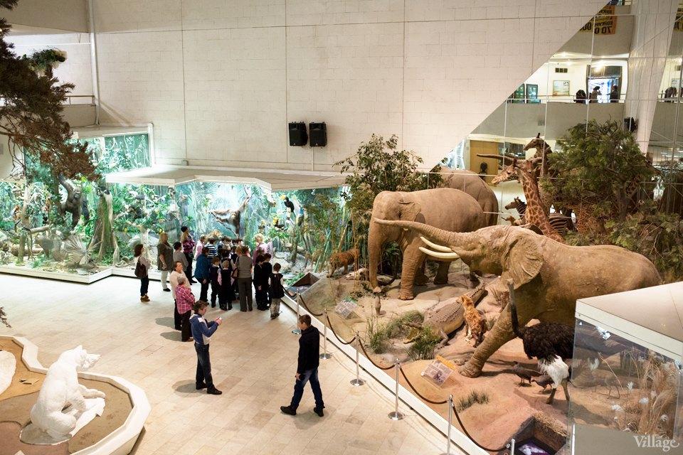 Перемены в Дарвиновском музее: «Можно бегать, прыгать и шуметь». Изображение № 3.