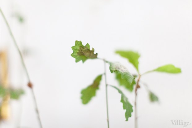 Где посадки: Что горожане выращивают на балконах иподоконниках. Изображение № 64.