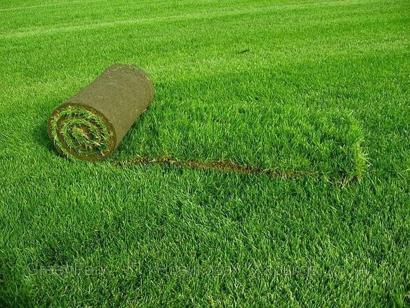 Рулонный газон. Изображение № 13.