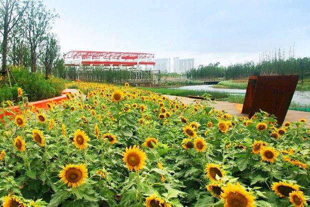 Идеи для города: Парк на месте свалки вТяньцзине. Изображение № 12.