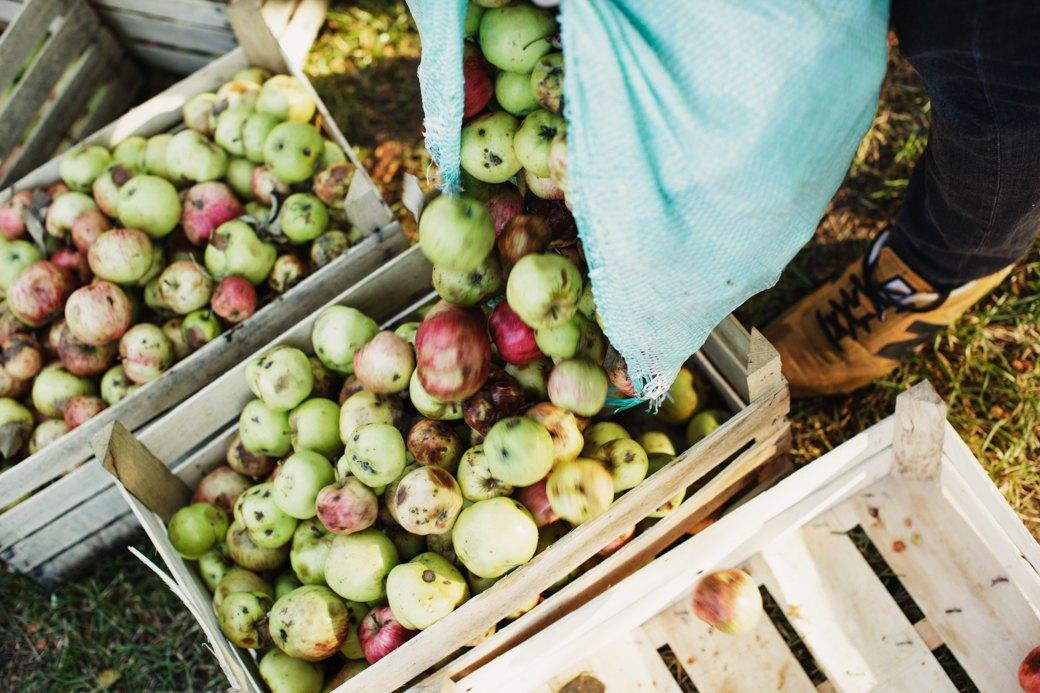 Партия «Яблоко»: Как организовать производство сидра на даче . Изображение № 11.