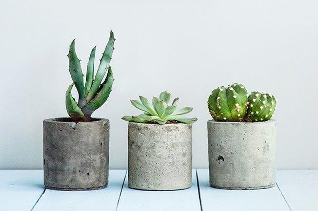 Как подобрать цветы и комнатные растения для дома. Изображение № 7.