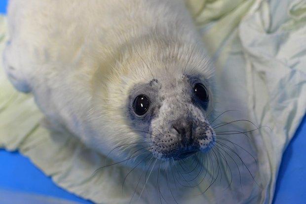 Первые пациенты Центра реабилитации морских млекопитающих. Изображение № 1.