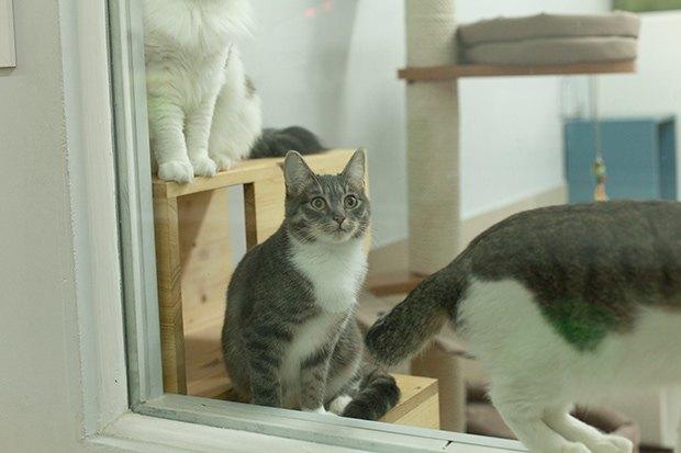 Кошкин дом: Как подготовить квартиру к появлению домашнего питомца. Изображение № 6.