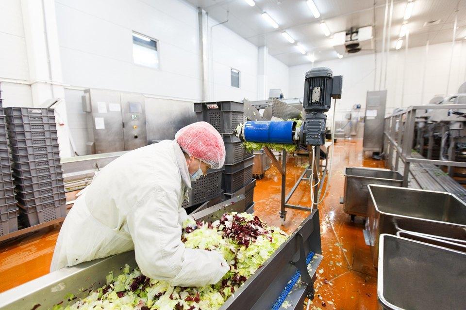 Производственный процесс: Как делают салаты для McDonald's. Изображение № 24.