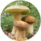 Где, когда икак собирать грибы . Изображение № 6.