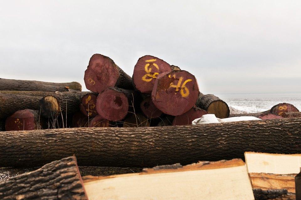 Как вПетербурге строят корабль петровского времени. Изображение № 14.