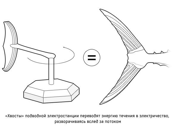 Дизайн от природы: Ресторан-кокон и «тунцовая» электростанция . Изображение № 18.