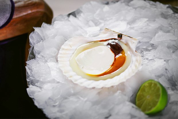 Обмани меня: Как сделать изпаштета помидор, а из творога — гребешок. Изображение № 1.