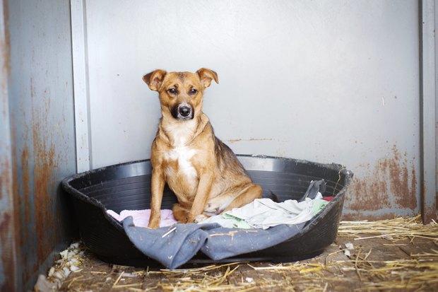 Выставка бездомных собак, театральный марафон в парке и летний «Ламбада-маркет». Изображение № 6.