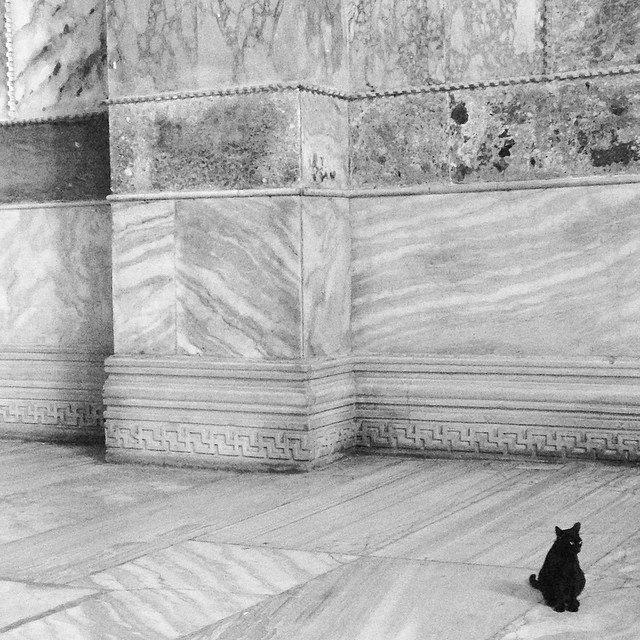 Музейные коты вснимках Instagram. Изображение № 19.