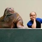 Как живёт и меняется Ленинградский зоопарк . Изображение № 45.