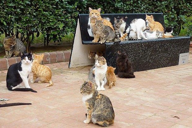10 мест вСтамбуле, куда ходят сами стамбульцы. Изображение № 6.