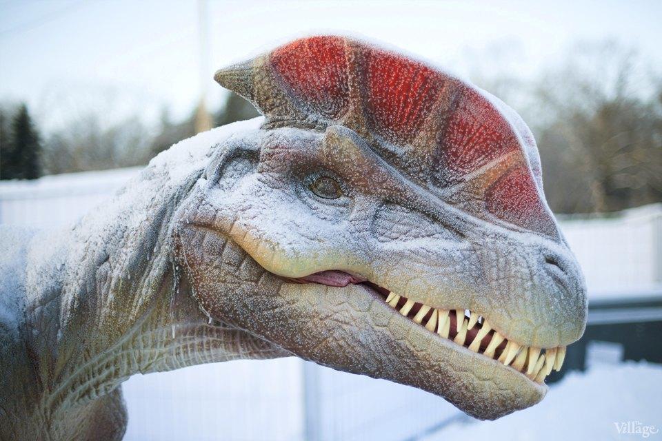 Фоторепортаж: Парк динозавров на ВВЦ. Изображение № 2.