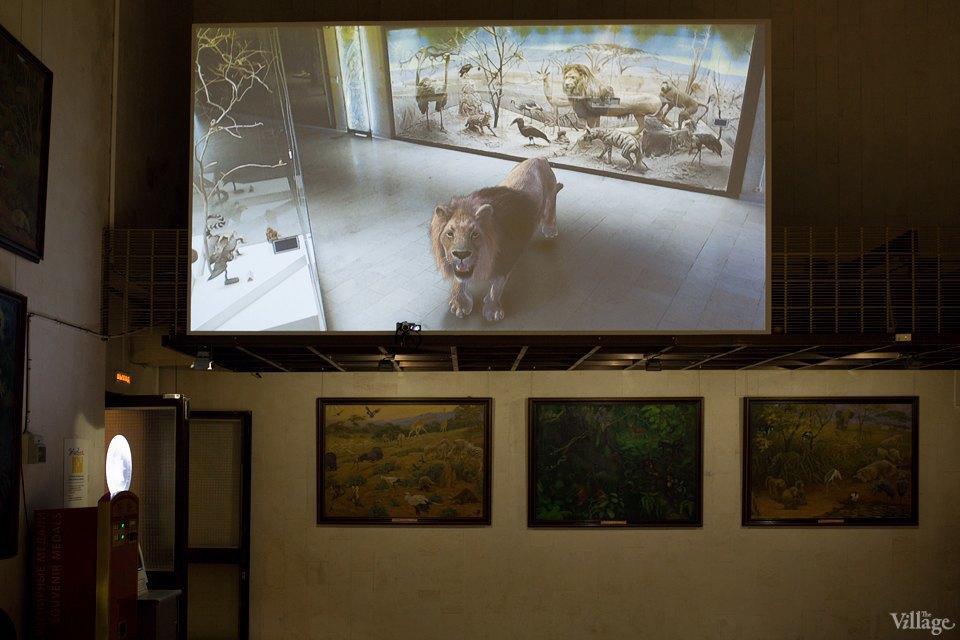 Перемены в Дарвиновском музее: «Можно бегать, прыгать и шуметь». Изображение № 15.