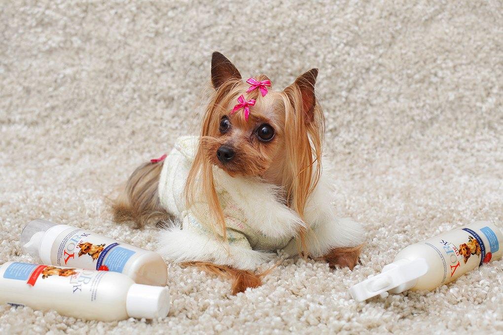 Yorkme, my friend: Какзарабатывать миллионы накарликовых собаках. Изображение № 1.