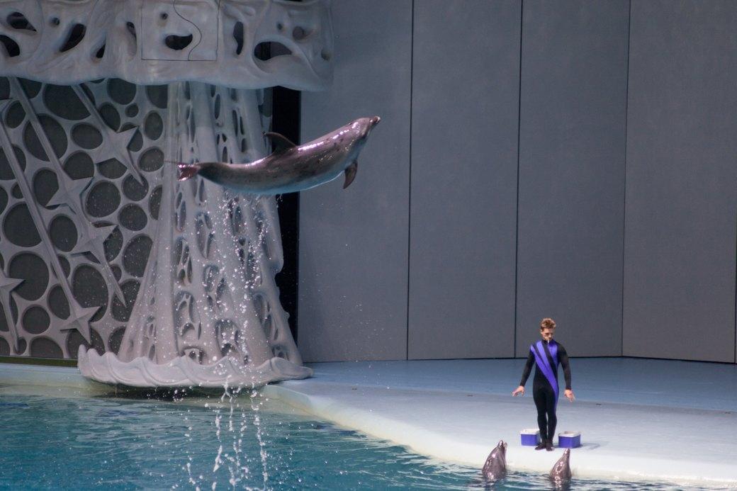 «Главные здесь — косатки, но самые милые — моржи»: На ВДНХ открылся океанариум. Изображение № 16.