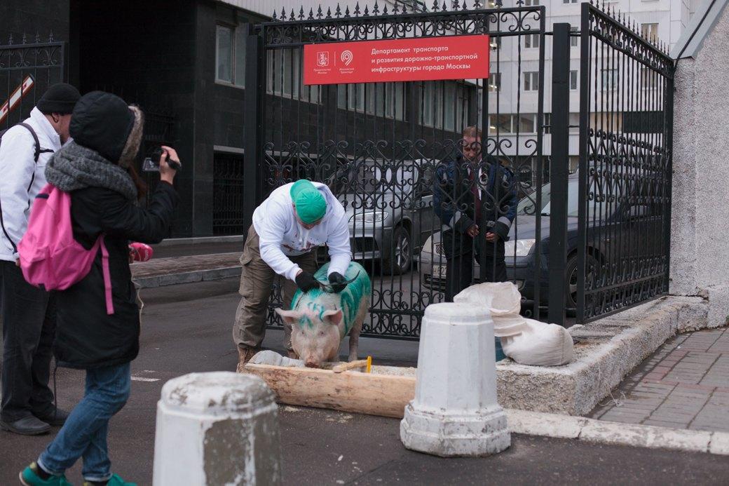 Как паркмен и боров пикетировали московский департамент транспорта. Изображение № 7.
