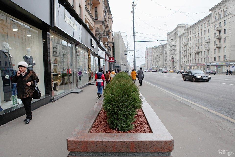 Фото дня: Туи и можжевельник наТверской улице. Изображение № 3.