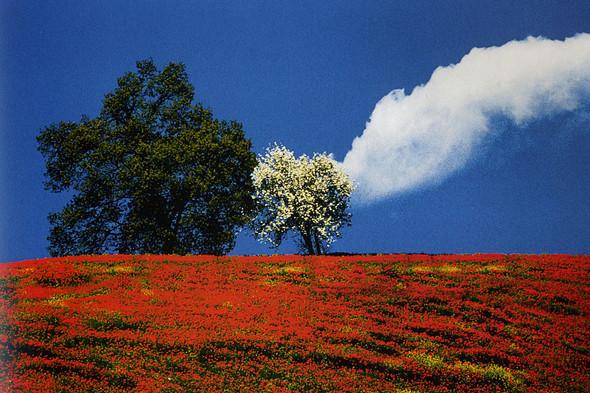 Выставку работ Франко Фонтаны покажут в «Росфото». Изображение № 5.