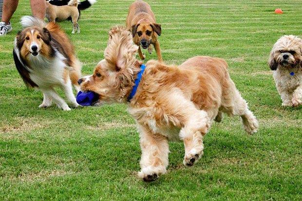 Иностранный опыт: Как устроены площадки для выгула собак в 5 городах мира. Изображение № 8.