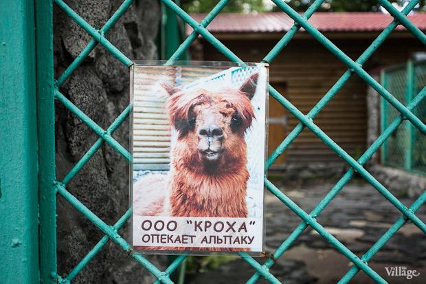 Как живёт и меняется Ленинградский зоопарк . Изображение № 47.
