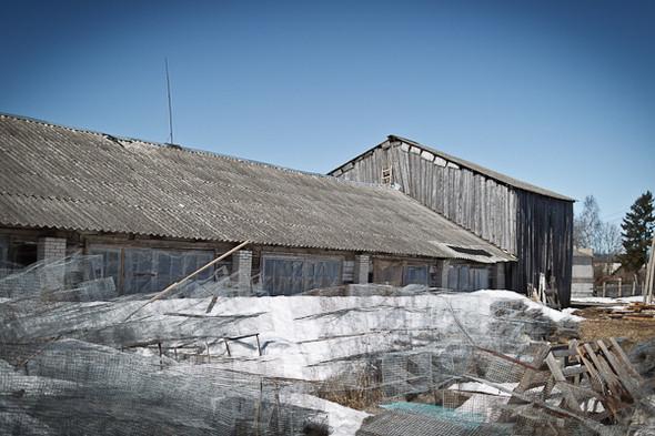 Народное хозяйство: 5 ферм, продукты которых можно купить в Петербурге. Изображение № 63.