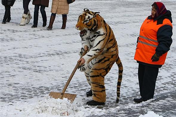 Уборка снега в Киеве. Изображение № 4.