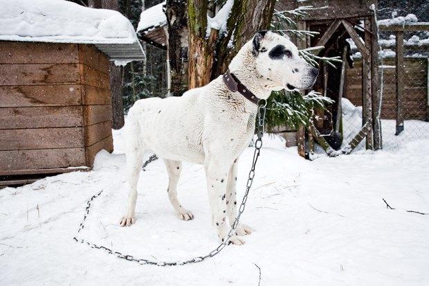 Личный опыт: Что делать, если вы нашли собаку. Изображение № 3.